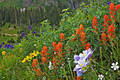 A Field of Wildflowers print