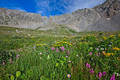 Wildflowers in Mayflower Gulch print