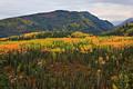 Fall colors in Denali National Park print