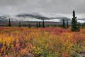 Denali Tundra print