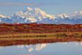 Fall along the Denali Highway print