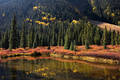 Fall Color along South Mineral Creek print