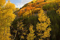 Colorful hillside along Lime Creek print