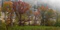 Lifting fog at Steel Creek print