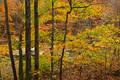 Back lit trees along Richland Creek print