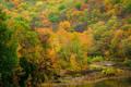 Fall colors Lee Creek print