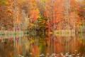 The Pond print