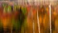 Pond Astract print