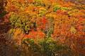 Fall on the Ozark Higlands Trail print