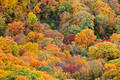Blanket of Color at Mount Magazine  print