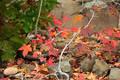 Fall Leaves Cossatot River print