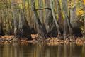 Hickson Lake, Robe Bayou print