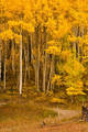 Aspen Grove near Mount Wilson print