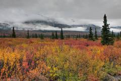 Alaska, fall