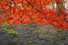 Leaves hang over the Mulberry River