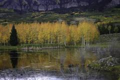 Reflections  Near Silver Jack Reservoir