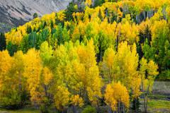 Aspen Grove 5