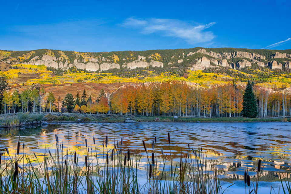 Cattails and Aspens