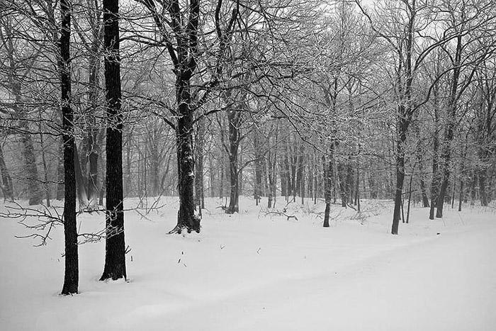 Arkansas, winter, snow, photo