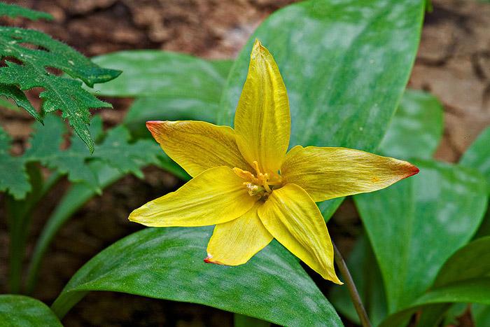 yellow, Arkansas, photo