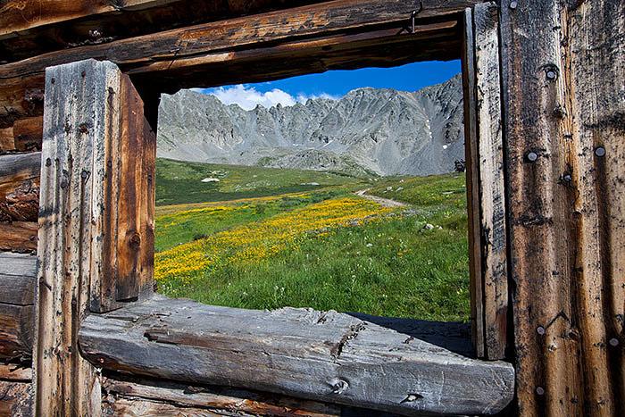 colorado, summer, wildflowers, photo