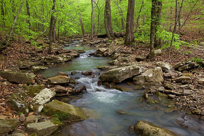 A small feeder stream to Lick Branch near the Ozark Highlands trailhead.