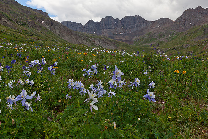 The Columbine were abundant in American Basin