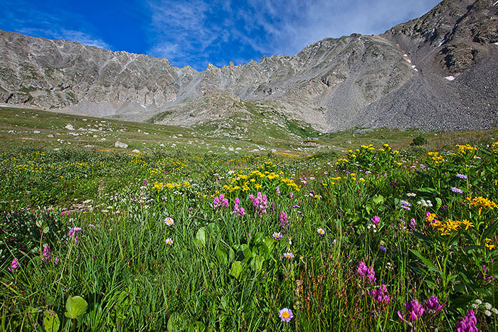 colorado, summer, wildflowers, photo