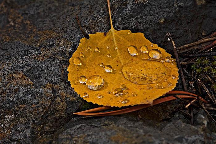 colorado, fall, macro, photo