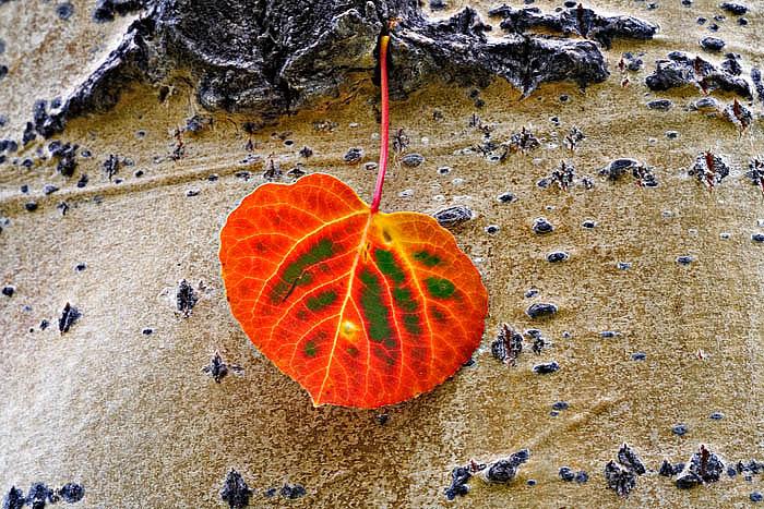 colorado, fall, photo