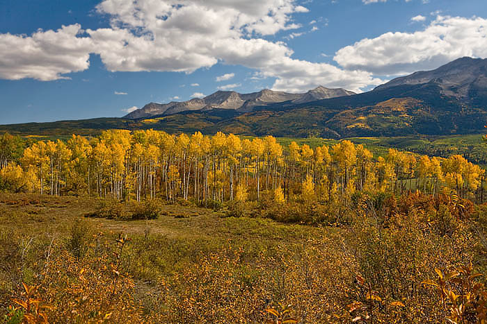 The aspens were on fire on Kebler Pass Road