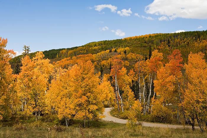 County Road 265 meanders through the aspens groves
