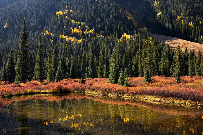 The ground cover and the aspens reflect in a small pond near South Mineral Creek near Silverton,Colorado