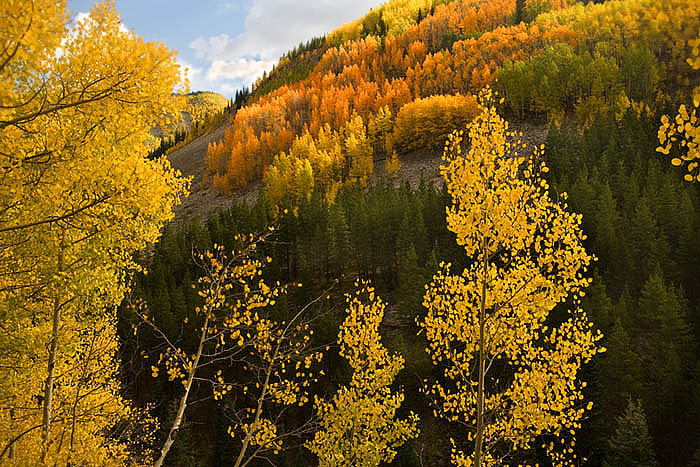 A colorful fall hillside along Limecreek south of Silverton, Colorado