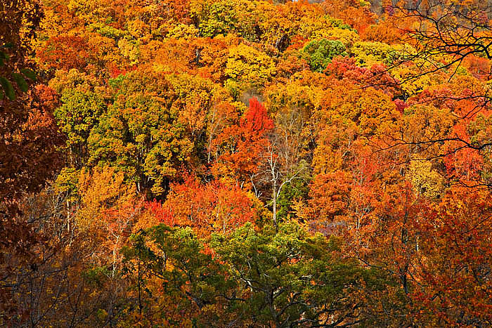 The colors were peaking in early November along the Ozark Highlands trail.