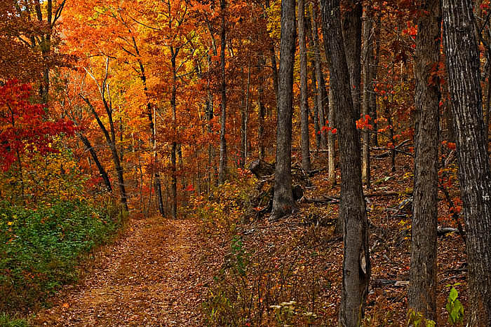 A short drive down this dirt road just off the Pig Trail yielded this colorful fall scene