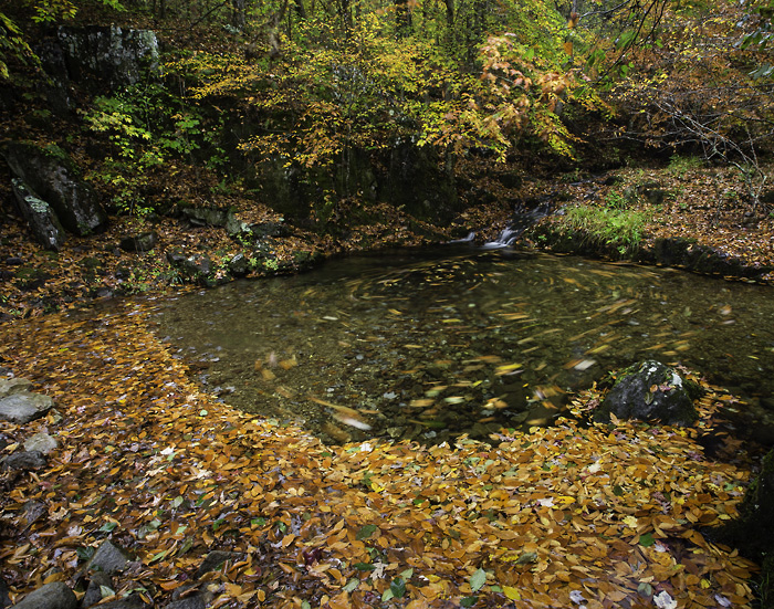 Collier spring
