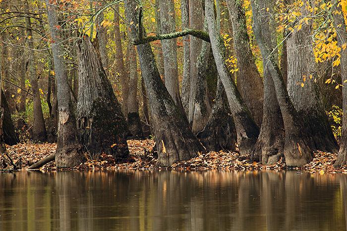 Arkansas, Fall